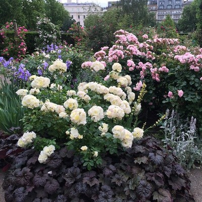 Rose Garden_Hyde Park_London_UK_060815B
