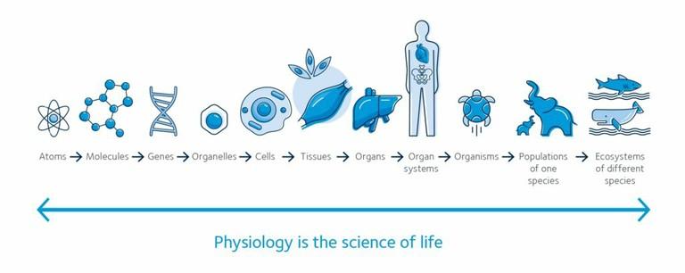 Physiology_012520