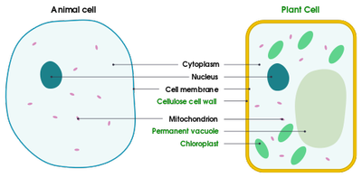 Simple_Animal_and_Plant_Cells_021220A