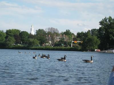 Harvard (Charles River) IMG 7667
